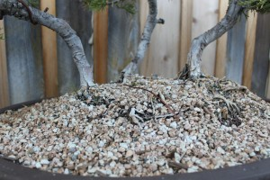 bonsai soil